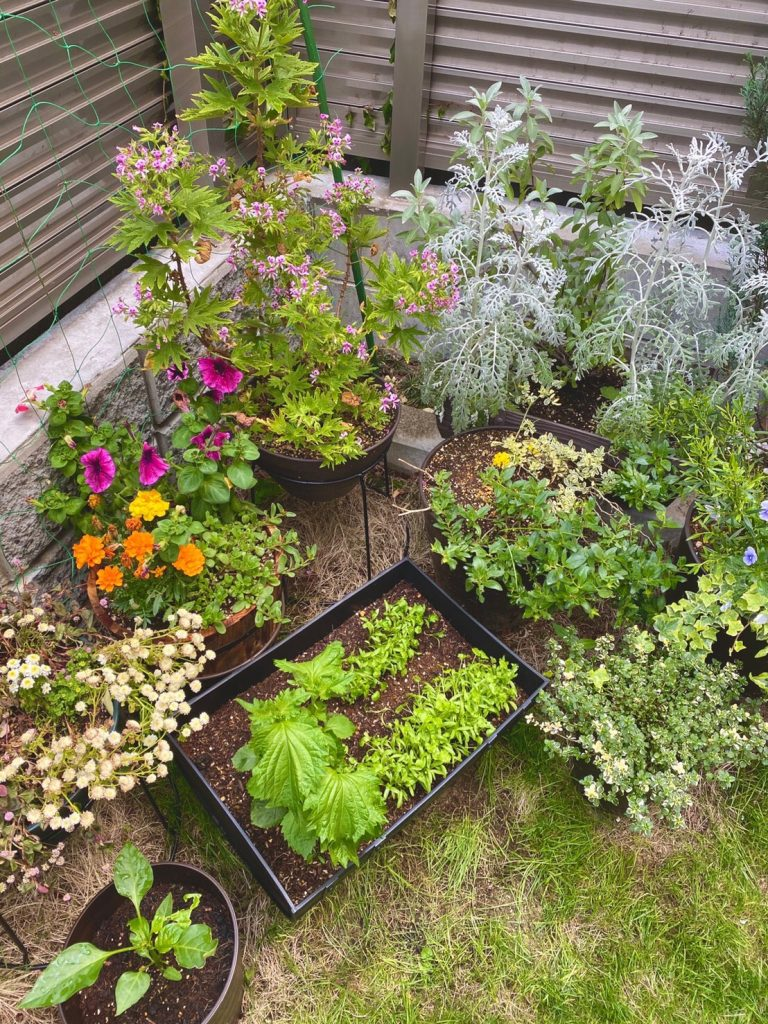 夏は野菜、秋冬はハーブやお花を