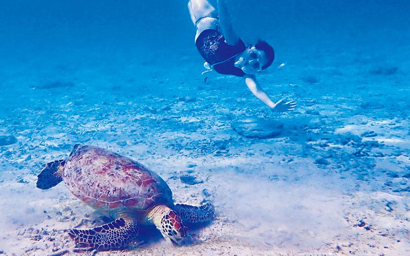 旅作家が推薦!「星の降る南の島でウミガメと泳ぎたい!」【座間味(沖縄)編】|いつか行きたいアラサー女子旅