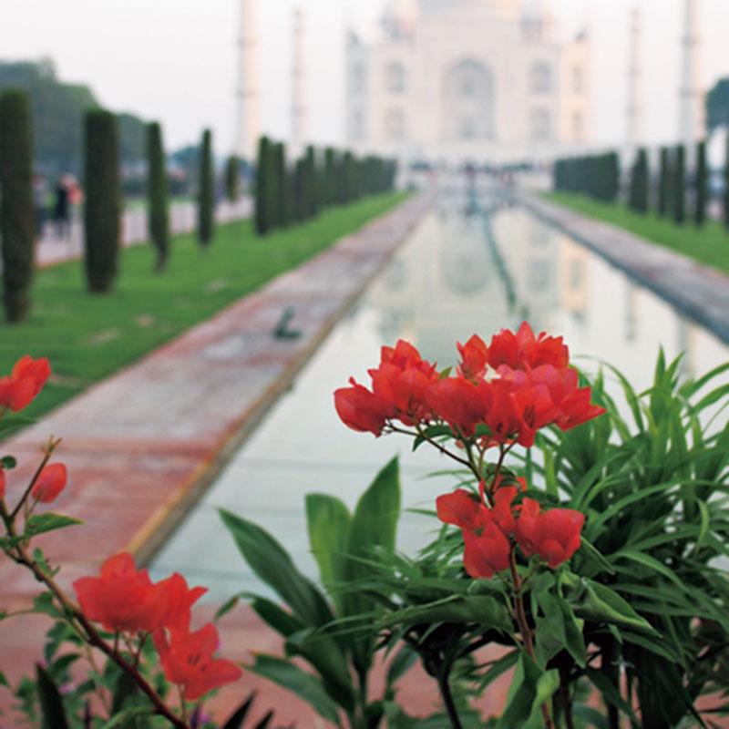 インドのタージマハルを背景に、キレイなお花を撮影しました。遠近法