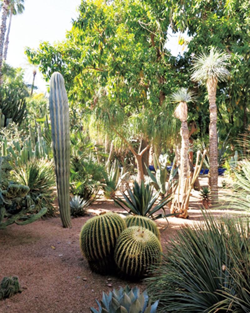 同じ砂漠でもドバイの豪華なイメージとは正反対だったモロッコ。