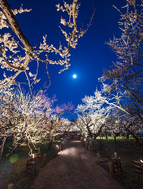 金沢の兼六園・岡山の後楽園と並