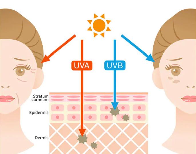 ⽬から紫外線が⼊ると、脳を刺激