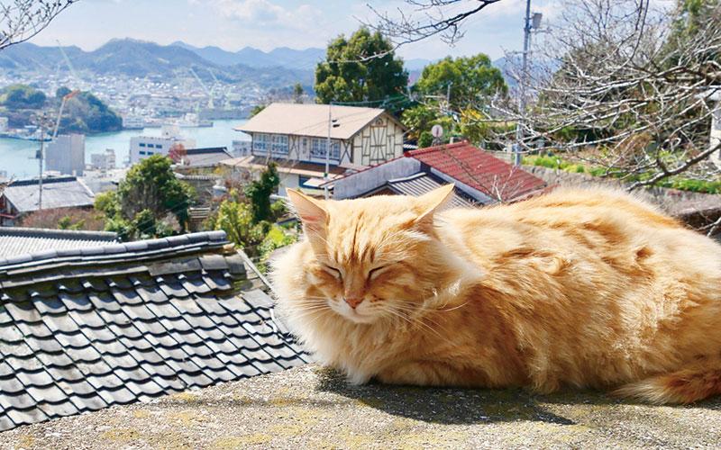旅作家が推薦「猫にも会える、絶景自転車旅がしたい!」【しまなみ海道(広島・愛媛県)編】|いつか行きたいアラサー女子旅