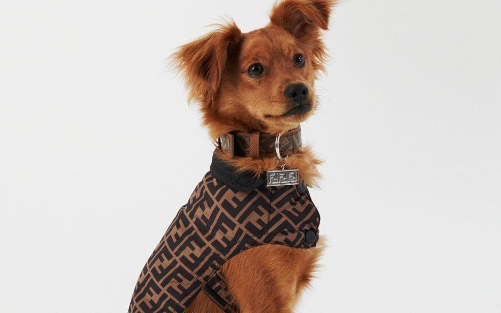 """愛犬もフェンディでおめかし!ペット専用 """"FFロゴ""""入りアクセサリーに注目。"""