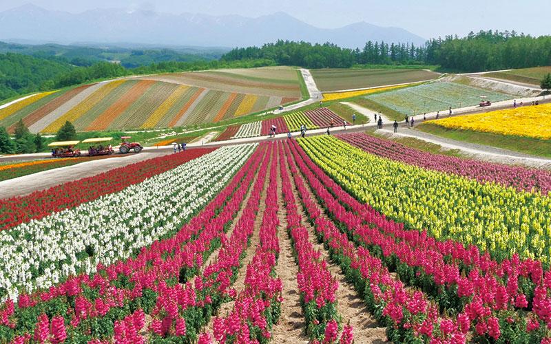 「色彩を愛でる夏旅で、心身をリフレッシュしたい!」【富良野・美瑛(北海道)編】|いつか行きたいアラサー女子旅