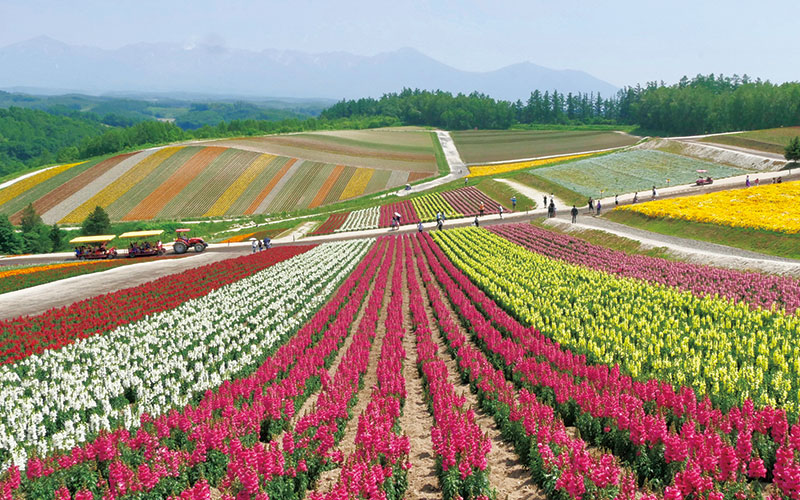「色彩を愛でる夏旅で、心身をリフレッシュしたい!」 富良野・美瑛(北海道)|いつか行きたいアラサー女子旅